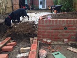 Dog inspection